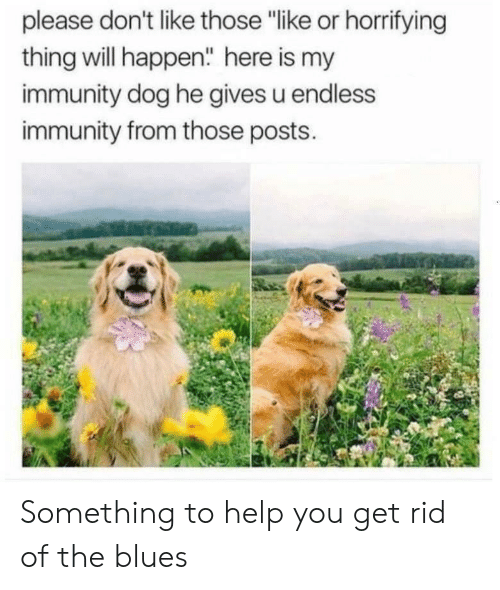 """Blues: please don't like those """"like or horrifying  thing will happen"""" here is my  immunity dog he gives u endless  immunity from those posts. Something to help you get rid of the blues"""