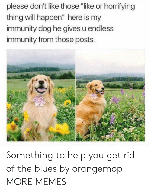 """Blues: please don't like those """"like or horrifying  thing will happen"""" here is my  immunity dog he gives u endless  immunity from those posts. Something to help you get rid of the blues by orangemop MORE MEMES"""