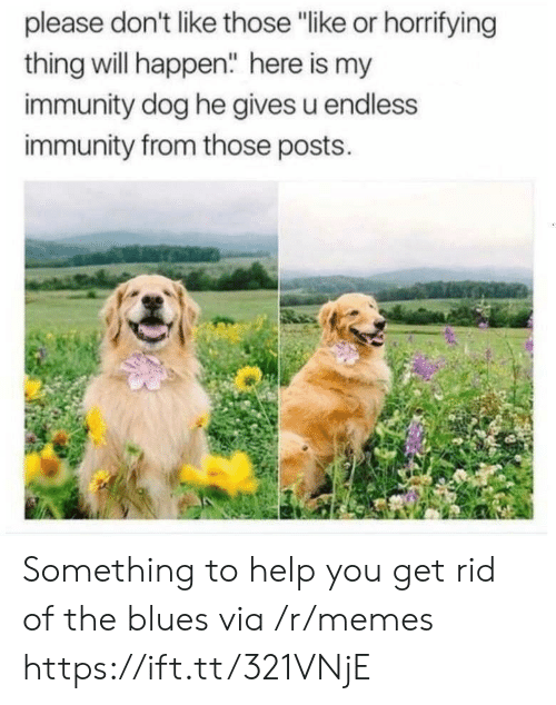 """Blues: please don't like those """"like or horrifying  thing will happen"""" here is my  immunity dog he gives u endless  immunity from those posts. Something to help you get rid of the blues via /r/memes https://ift.tt/321VNjE"""