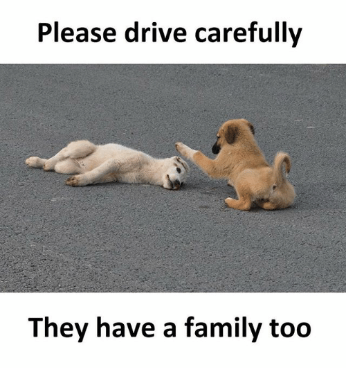 Family, Memes, and Drive: Please drive carefully  They have a family too