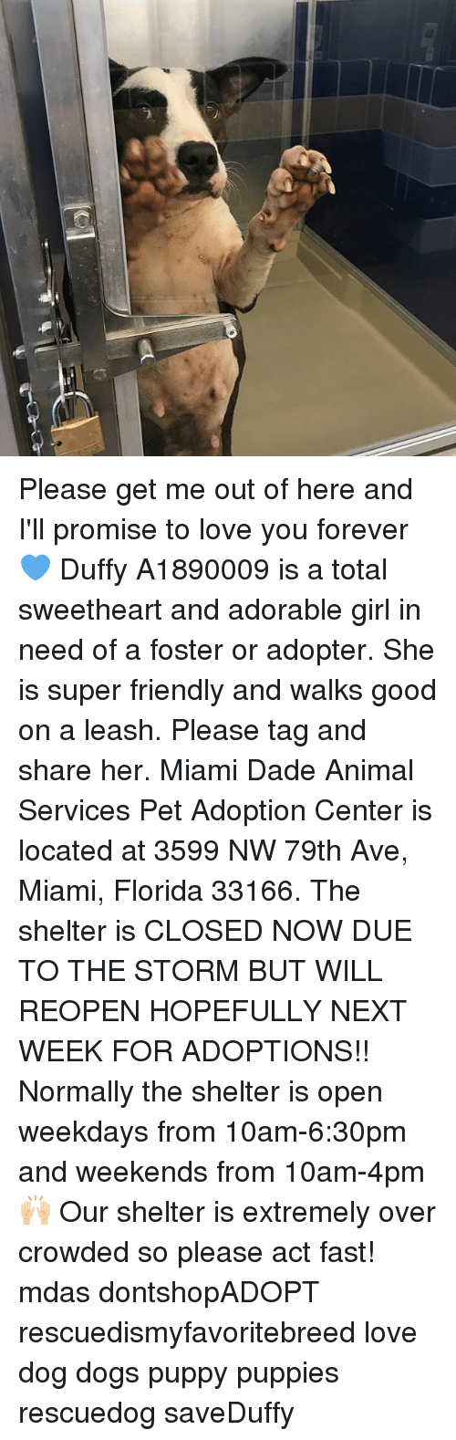 Sweethearted: Please get me out of here and I'll promise to love you forever 💙 Duffy A1890009 is a total sweetheart and adorable girl in need of a foster or adopter. She is super friendly and walks good on a leash. Please tag and share her. Miami Dade Animal Services Pet Adoption Center is located at 3599 NW 79th Ave, Miami, Florida 33166. The shelter is CLOSED NOW DUE TO THE STORM BUT WILL REOPEN HOPEFULLY NEXT WEEK FOR ADOPTIONS!! Normally the shelter is open weekdays from 10am-6:30pm and weekends from 10am-4pm 🙌🏼 Our shelter is extremely over crowded so please act fast! mdas dontshopADOPT rescuedismyfavoritebreed love dog dogs puppy puppies rescuedog saveDuffy