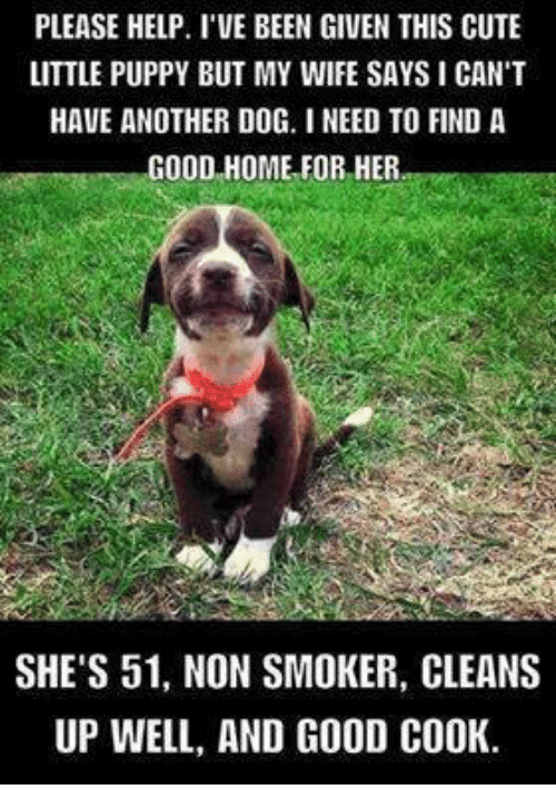 Memes, Puppies, and Puppy: PLEASE HELP. I VE BEEN GIVEN THIS CUTE  LITTLE PUPPY BUT MY WIFE SAYS I CAN'T  HAVE ANOTHER DOG. I NEED TO FIND A  GOOD HOME FOR HER  SHE'S 51, NON SMOKER, CLEANS  UP WELL, AND GOOD COOK.