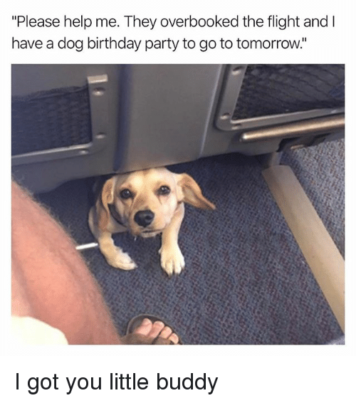 """Birthday, Funny, and Party: """"Please help me. They overbooked the flight and I  have a dog birthday party to go to tomorrow. I got you little buddy"""