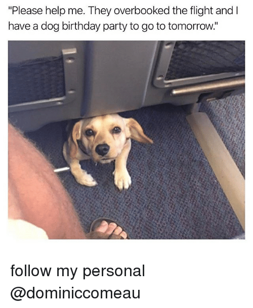 """Birthday, Memes, and Party: """"Please help me. They overbooked the flight and l  have a dog birthday party to go to tomorrow. follow my personal @dominiccomeau"""