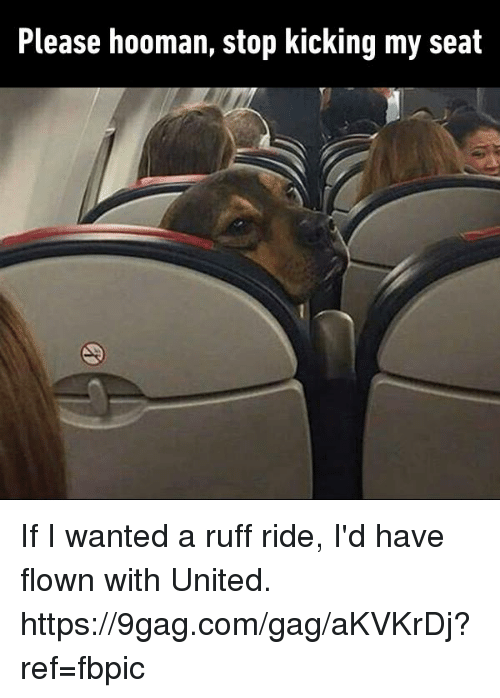9gag, Dank, and United: Please hooman, stop kicking my seat If I wanted a ruff ride, I'd have flown with United. https://9gag.com/gag/aKVKrDj?ref=fbpic
