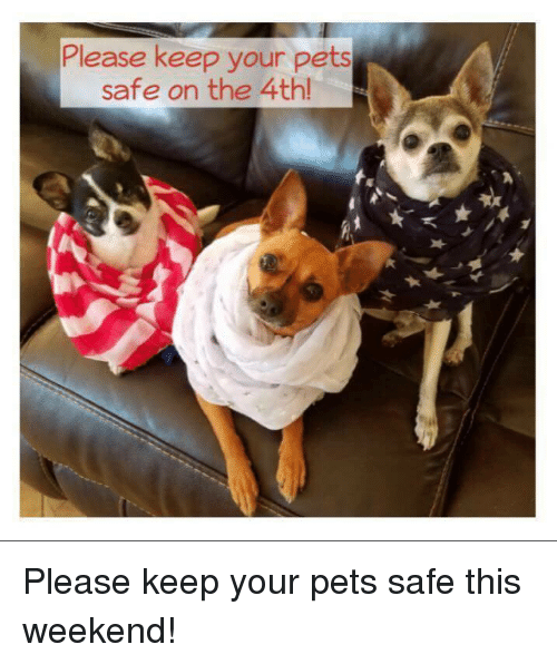 Memes, Pets, and 🤖: Please keep your pets  safe on the 4th! Please keep your pets safe this weekend!