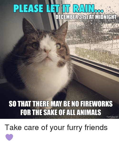 furrys: PLEASE LET IT RAIN  DECEMBER 31st AT MIDNIGHT  SO THAT THERE MAY BE NO FIREWORKS  FOR THE SAKE OF ALL ANIMALS  Monty Boy net Take care of your furry friends 💜