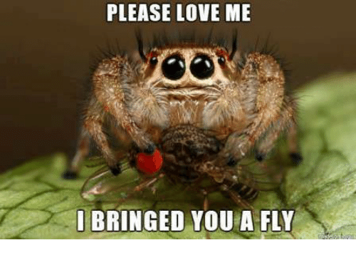 bringed: PLEASE LOVE ME  BRINGED YOU A FLY