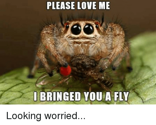 bringed: PLEASE LOVE ME  I BRINGED YOU A FLY