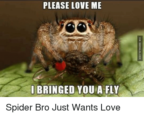 bringed: PLEASE LOVE ME  I BRINGED YOU A FLY Spider Bro Just Wants Love