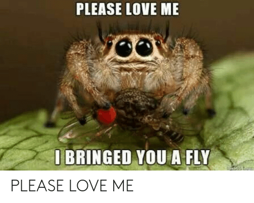 bringed: PLEASE LOVE ME  O BRINGED YOU A FLY  de PLEASE LOVE ME