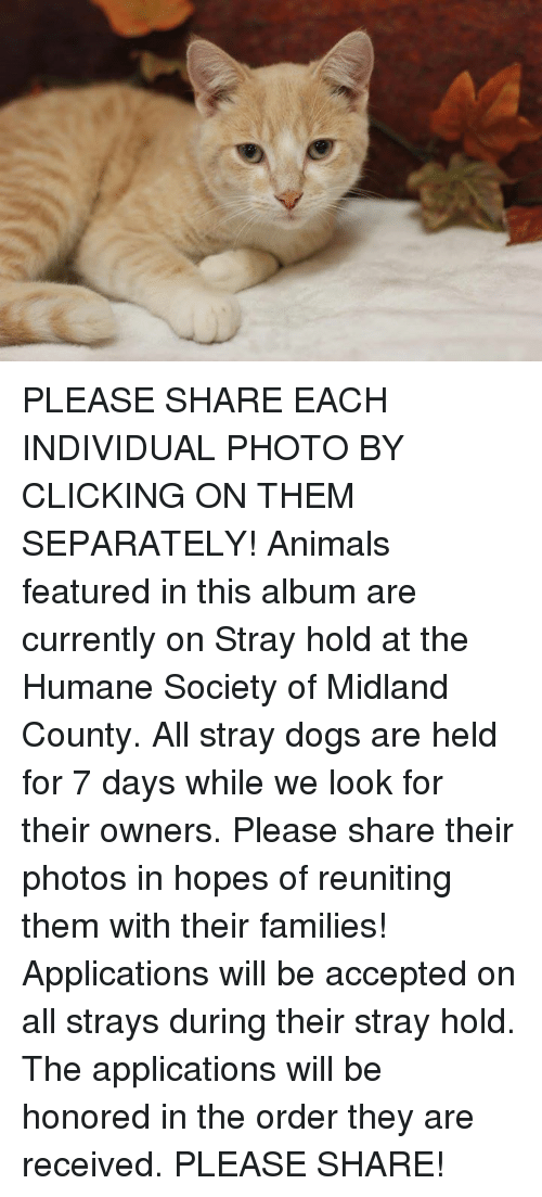 Animals, Dogs, and Memes: PLEASE SHARE EACH INDIVIDUAL PHOTO BY CLICKING ON THEM SEPARATELY!  Animals featured in this album are currently on Stray hold at the Humane Society of Midland County.  All stray dogs are held for 7 days while we look for their owners.  Please share their photos in hopes of reuniting them with their families!  Applications will be accepted on all strays during their stray hold.  The applications will be honored in the order they are received.    PLEASE SHARE!