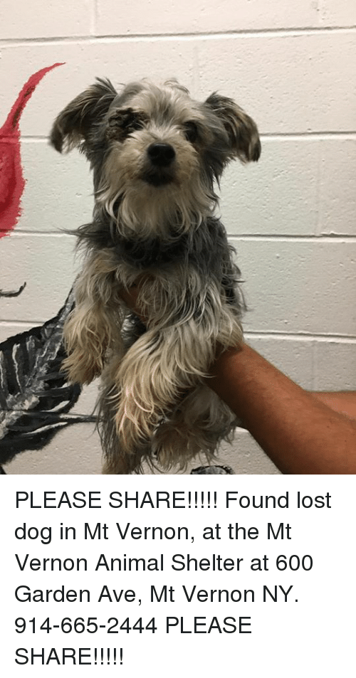 Memes Lost And Animal Please Share Found