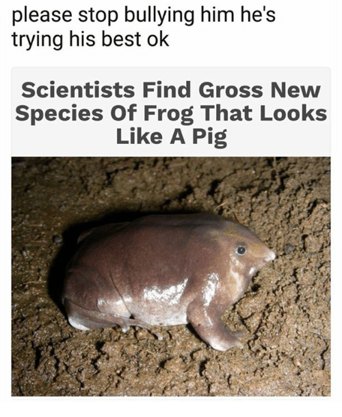Best, Pig, and Him: please stop bullying him he's  trying his best ok  Scientists Find Gross New  Species Of Frog That Looks  Like A Pig