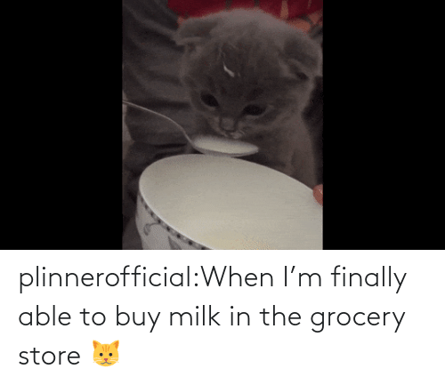 Grocery: plinnerofficial:When I'm finally able to buy milk in the grocery store 🐱