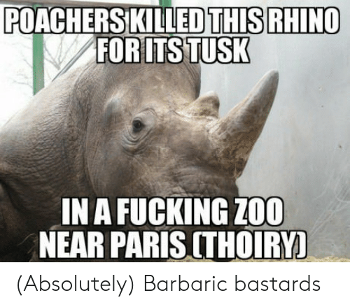 Tusk: POACHERSKILLEDTHIS RHINO  FOR ITS TUSK  IN A FUCKING Z00  NEAR PARIS CTHOIRY! (Absolutely) Barbaric bastards