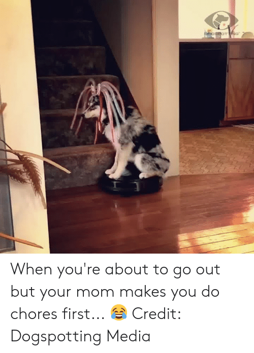 chores: pocSPOTNG When you're about to go out but your mom makes you do chores first... 😂  Credit: Dogspotting Media