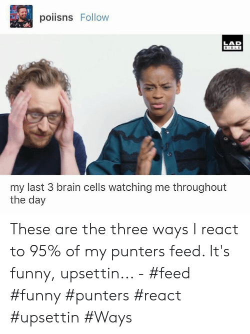 Bible: poiisns Follow  LAD  BIBLE  my last 3 brain cells watching me throughout  the day These are the three ways I react to 95% of my punters feed. It's funny, upsettin... - #feed #funny #punters #react #upsettin #Ways