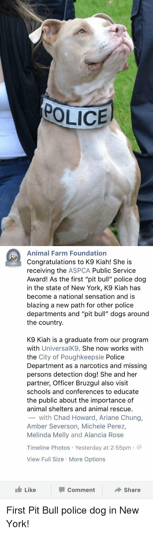 """Aspca: POLICE   Animal Farm Foundation  Congratulations to K9 Kiah! She is  receiving the  ASPCA Public Service  Award! As the first """"pit bull"""" police dog  in the state of New York, K9 Kiah has  become a national sensation and is  blazing a new path for other police  departments and """"pit bull"""" dogs around  the country  K9 Kiah is a graduate from our program  with  UniversalK9. She now works with  the City of Poughkeepsie Police  Department as a narcotics and missing  persons detection dog! She and her  partner, Officer Bruzgul also visit  schools and conferences to educate  the public about the importance of  animal shelters and animal rescue.  with Chad Howard, Ariane Chung,  Amber Severson, Michele Perez,  Melinda Melly and Alancia Rose  Timeline Photos Yesterday at 2:55pm  a  View Full Size More Options  Like  Share  Comment First Pit Bull police dog in New York!"""