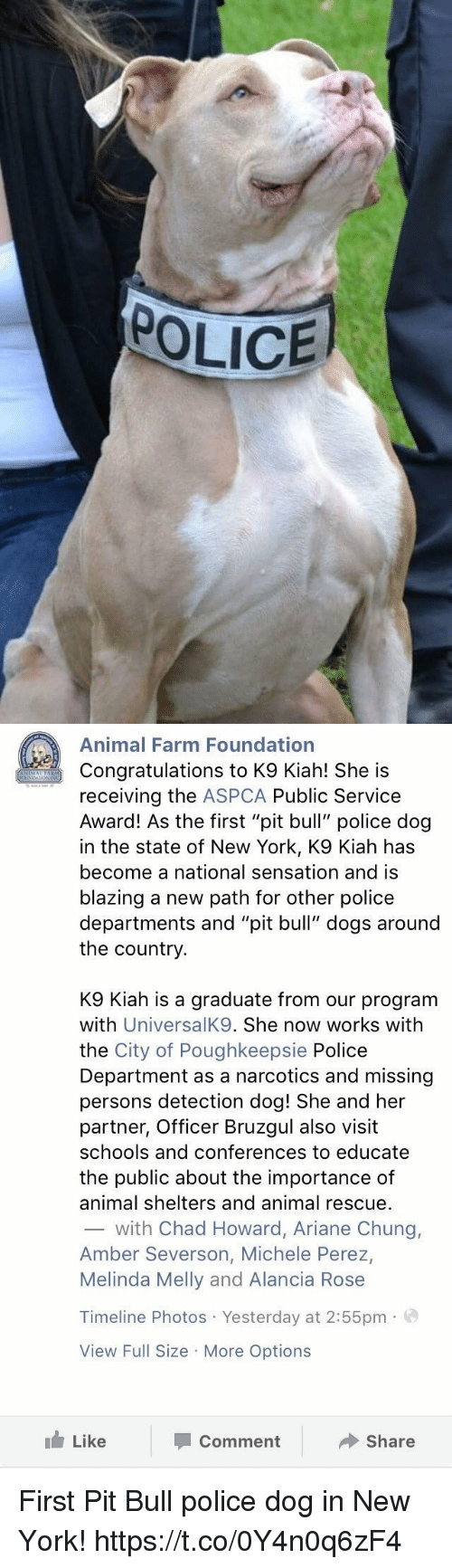 """Aspca: POLICE   Animal Farm Foundation  Congratulations to K9 Kiah! She is  receiving the  ASPCA Public Service  Award! As the first """"pit bull"""" police dog  in the state of New York, K9 Kiah has  become a national sensation and is  blazing a new path for other police  departments and """"pit bull"""" dogs around  the country  K9 Kiah is a graduate from our program  with  UniversalK9. She now works with  the City of Poughkeepsie Police  Department as a narcotics and missing  persons detection dog! She and her  partner, Officer Bruzgul also visit  schools and conferences to educate  the public about the importance of  animal shelters and animal rescue.  with Chad Howard, Ariane Chung,  Amber Severson, Michele Perez,  Melinda Melly and Alancia Rose  Timeline Photos Yesterday at 2:55pm  a  View Full Size More Options  Like  Share  Comment First Pit Bull police dog in New York! https://t.co/0Y4n0q6zF4"""