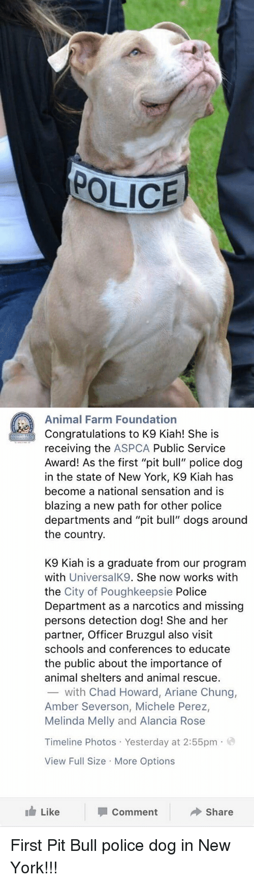 """Aspca: POLICE   Animal Farm Foundation  Congratulations to K9 Kiah! She is  receiving the ASPCA Public Service  Award! As the first """"pit bull"""" police dog  in the state of New York, K9 Kiah has  become a national sensation and is  blazing a new path for other police  departments and """"pit bull"""" dogs around  the country.  K9 lah is a graduate from our program  with  UniversalK9. She now works with  the City of Poughkeepsie Police  Department as a narcotics and missing  persons detection dog! She and her  partner, Officer Bruzgul also visit  schools and conferences to educate  the public about the importance of  animal shelters and animal rescue.  with Chad Howard, Ariane Chung,  Amber Severson, Michele Perez,  Melinda Melly and Alancia Rose  Timeline Photos Yesterday at 2:55pm  o  View Full Size More Options  Like  Share  Comment First Pit Bull police dog in New York!!!"""
