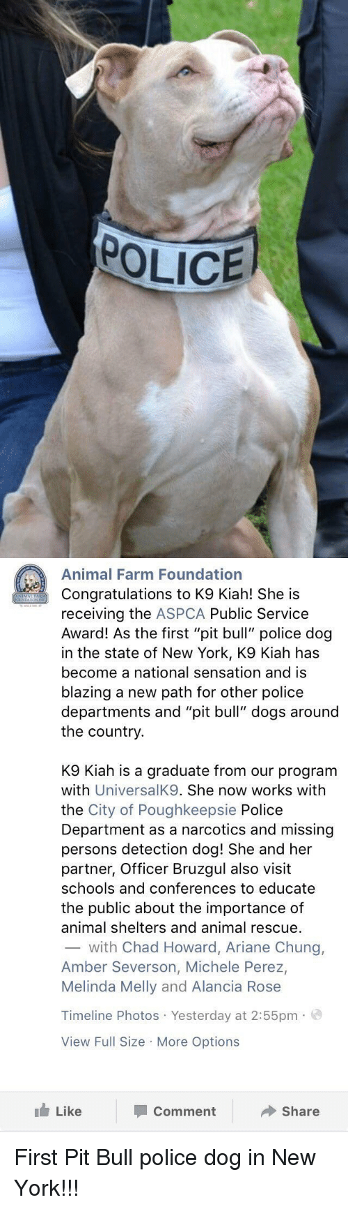 """Aspca: POLICE   Animal Farm Foundation  Congratulations to K9 Kiah! She is  receiving the  ASPCA Public Service  Award! As the first """"pit bull"""" police dog  in the state of New York, K9 Kiah has  become a national sensation and is  blazing a new path for other police  departments and """"pit bull"""" dogs around  the country  K9 Kiah is a graduate from our program  with  UniversalK9. She now works with  the City of Poughkeepsie Police  Department as a narcotics and missing  persons detection dog! She and her  partner, Officer Bruzgul also visit  schools and conferences to educate  the public about the importance of  animal shelters and animal rescue.  with Chad Howard, Ariane Chung,  Amber Severson, Michele Perez,  Melinda Melly and Alancia Rose  Timeline Photos Yesterday at 2:55pm.  View Full Size More Options  Like  Share  Comment First Pit Bull police dog in New York!!!"""