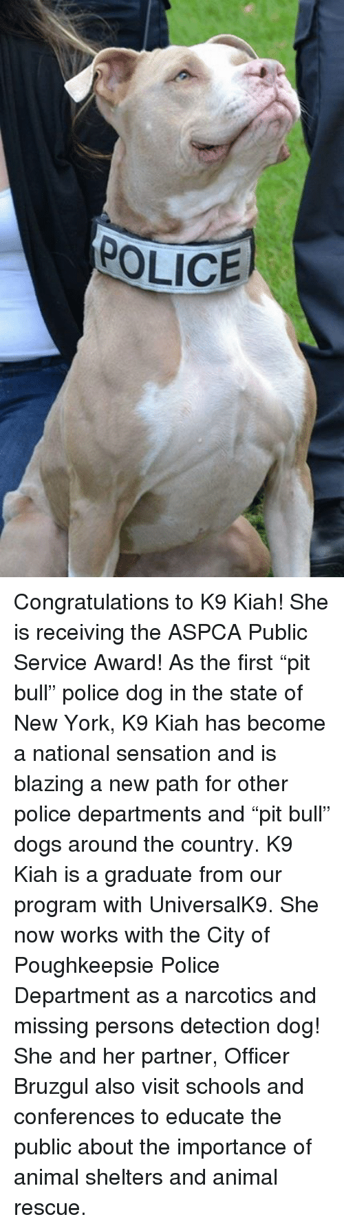 """Aspca: POLICE Congratulations to K9 Kiah! She is receiving the ASPCA Public Service Award! As the first """"pit bull"""" police dog in the state of New York, K9 Kiah has become a national sensation and is blazing a new path for other police departments and """"pit bull"""" dogs around the country.   K9 Kiah is a graduate from our program with UniversalK9. She now works with the City of Poughkeepsie Police Department as a narcotics and missing persons detection dog! She and her partner, Officer Bruzgul also visit schools and conferences to educate the public about the importance of animal shelters and animal rescue."""