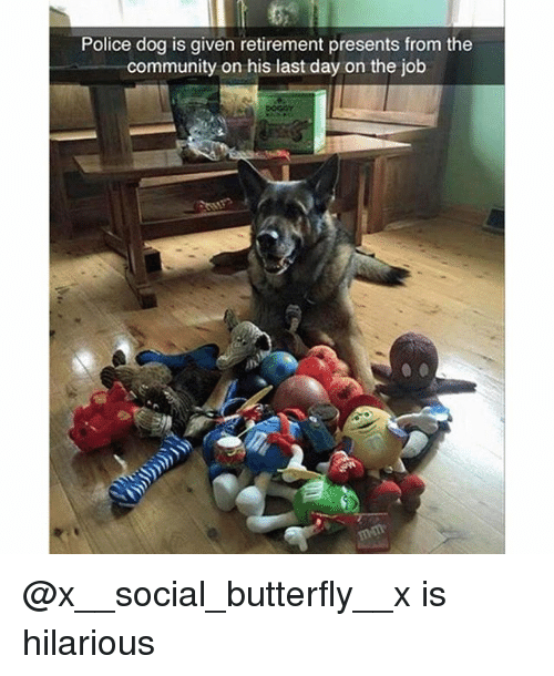 Community, Funny, and Police: Police dog is given retirement presents from the  community on his last day on the job @x__social_butterfly__x is hilarious