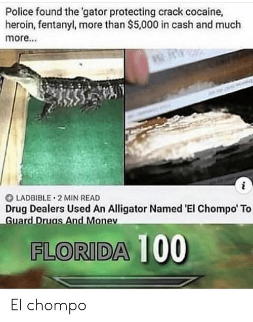 heroin: Police found the 'gator protecting crack cocaine,  heroin,fentanyl, more than $5,000 in cash and much  more...  LADBIBLE 2 MIN READ  Drug Dealers Used An Alligator Named 'El Chompo' To  Guard Druas And Monev  FLORIDA 100 El chompo