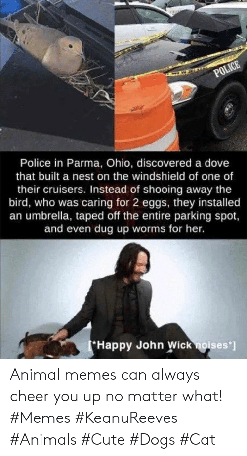 john wick: POLICE  Police in Parma, Ohio, discovered a dove  that built a nest on the windshield of one of  their cruisers. Instead of shooing away the  bird, who was caring for 2 eggs, they installed  an umbrella, taped off the entire parking spot,  and even dug up worms for her.  Happy John Wick noises ] Animal memes can always cheer you up no matter what! #Memes #KeanuReeves #Animals #Cute #Dogs #Cat