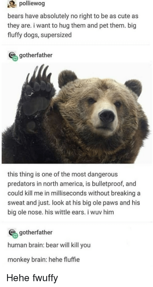 north america: polliewog  bears have absolutely no right to be as cute as  they are. i want to hug them and pet them. big  fluffy dogs, supersized  gotherfather  this thing is one of the most dangerous  predators in north america, is bulletproof, and  could kill me in milliseconds without breaking a  sweat and just. look at his big ole paws and his  big ole nose. his wittle ears. i wuv him  gotherfather  human brain: bear will kill you  monkey brain: hehe fluffie Hehe fwuffy