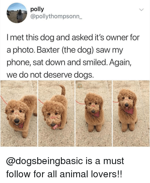 baxter: polly  @pollythompsonn_  I met this dog and asked it's owner for  a photo. Baxter (the dog) saw my  phone, sat down and smiled. Again,  we do not deserve dogs @dogsbeingbasic is a must follow for all animal lovers!!