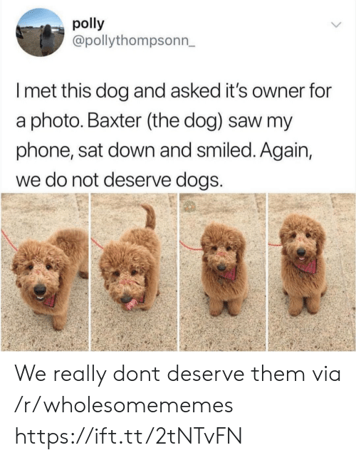 baxter: polly  @pollythompsonn,  I met this dog and asked it's owner for  a photo. Baxter (the dog) saw my  phone, sat down and smiled. Again,  we do not deserve dogS We really dont deserve them via /r/wholesomememes https://ift.tt/2tNTvFN