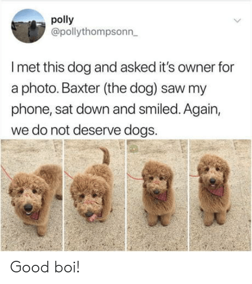 baxter: polly  @pollythompsonn  I met this dog and asked it's owner for  a photo. Baxter (the dog) saw my  phone, sat down and smiled. Again,  we do not deserve dogs. Good boi!
