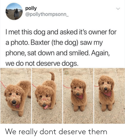 baxter: polly  @pollythompsonn,  I met this dog and asked it's owner for  a photo. Baxter (the dog) saw my  phone, sat down and smiled. Again,  we do not deserve dogS We really dont deserve them