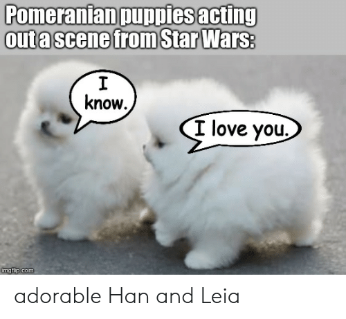 han-and-leia: Pomeranian puppiesacting  outa scene from StarWars  know  I love you.  umgtlip.com adorable Han and Leia