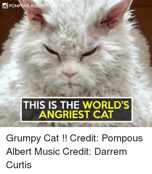 Angriest: POMPOUS ALBERT  THIS IS THE WORLD'S  ANGRIEST CAT Grumpy Cat !!  Credit: Pompous Albert Music Credit: Darrem Curtis