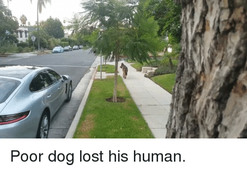Funny, Lost, and Fella: Poor dog lost his human.