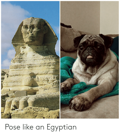 Egyptian: Pose like an Egyptian
