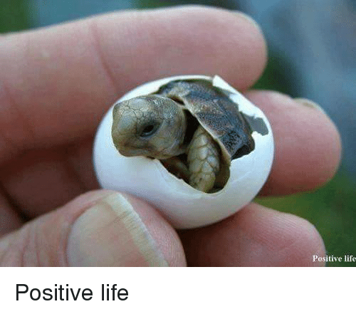 Memes, 🤖, and Posits: Positive life