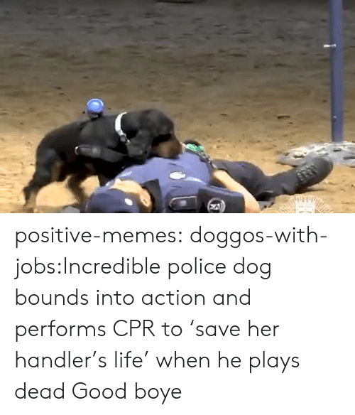 cpr: positive-memes:  doggos-with-jobs:Incredible police dog bounds into action and performs CPR to 'save her handler's life' when he plays dead Good boye