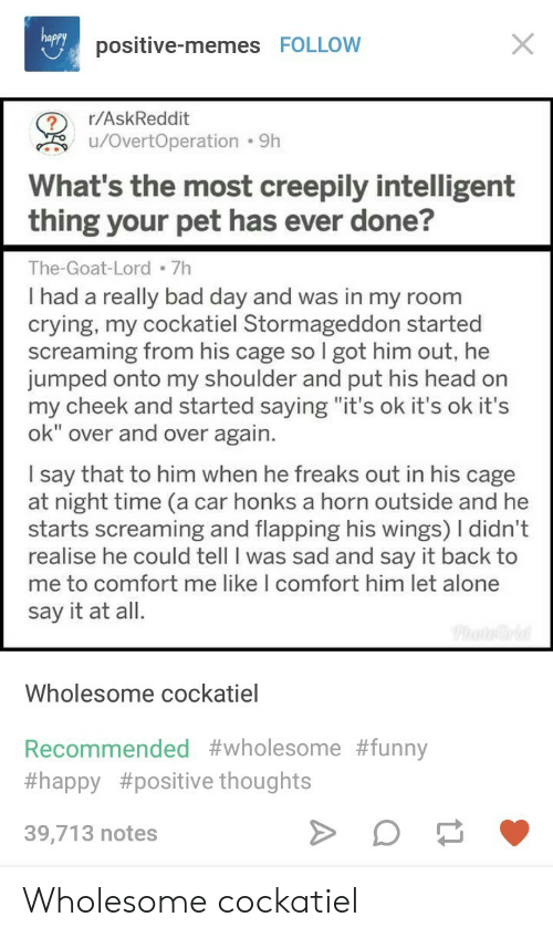 "Being Alone, Bad, and Bad Day: positive-memes FOLLOW  r/AskReddit  u/OvertOperation  9h  What's the most creepily intelligent  thing your pet has ever done?  The-Goat-Lord 7h  I had a really bad day and was in my room  crying, my cockatiel Stormageddon started  screaming from his cage so I got him out, he  jumped onto my shoulder and put his head on  my cheek and started saying ""it's ok it's ok it's  ok"" over and over again  I say that to him when he freaks out in his cage  at night time (a car honks a horn outside and he  starts screaming and flapping his wings) I didn't  realise he could tell I was sad and sav it back to  me to co  say it at all.  mfort me like I comfort him let alone  Wholesome cockatiel  Recommended #wholesome#funny  #happy #positive thoughts  39,713 notes Wholesome cockatiel"