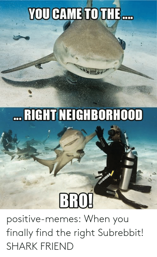 Shark: positive-memes:  When you finally find the right Subrebbit!  SHARK FRIEND