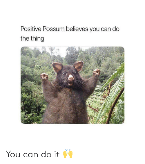 Possum: Positive Possum believes you can do  the thing You can do it 🙌