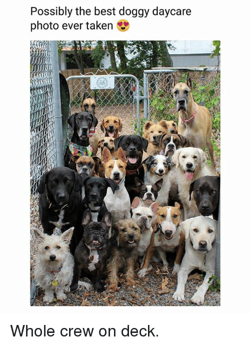 Memes, Taken, and Best: Possibly the best doggy daycare  photo ever taken Whole crew on deck.