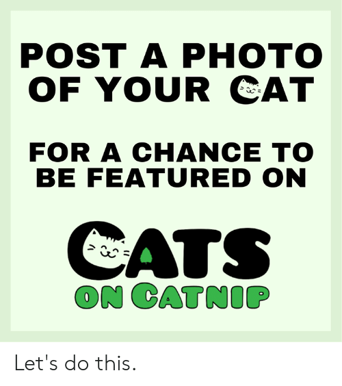 Cats On Catnip: POST A PНОТО  OF YOUR CAT  FOR A CHANCE TO  BE FEATURED ON  CATS  ON CATNIP Let's do this.