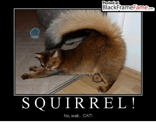 Funny Meme Photo Frame : Funny squirrel memes of on sizzle squirrels