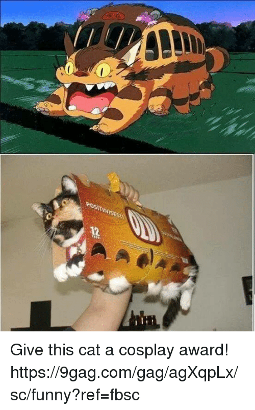 9gag, Dank, and Funny: POSTIWISES  12 Give this cat a cosplay award!  https://9gag.com/gag/agXqpLx/sc/funny?ref=fbsc