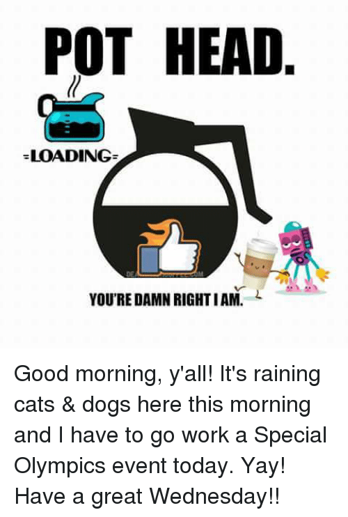 rain cat: POT HEAD  LOADING  YOU'RE DAMN RIGHTIAM. Good morning, y'all! It's raining cats & dogs here this morning and I have to go work a Special Olympics event today. Yay! Have a great Wednesday!!