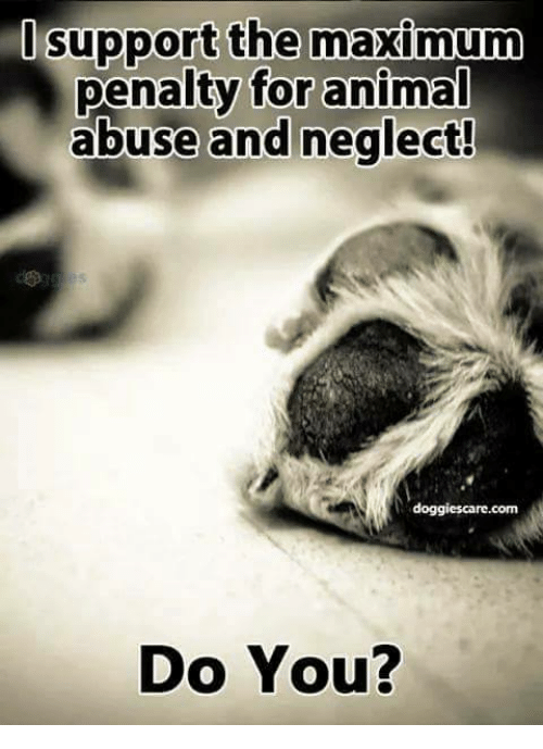 Memes, Animal Abuse, and 🤖: pport the maximum  penalty for animal  abuse and neglect!  doggies care.com  Do You?